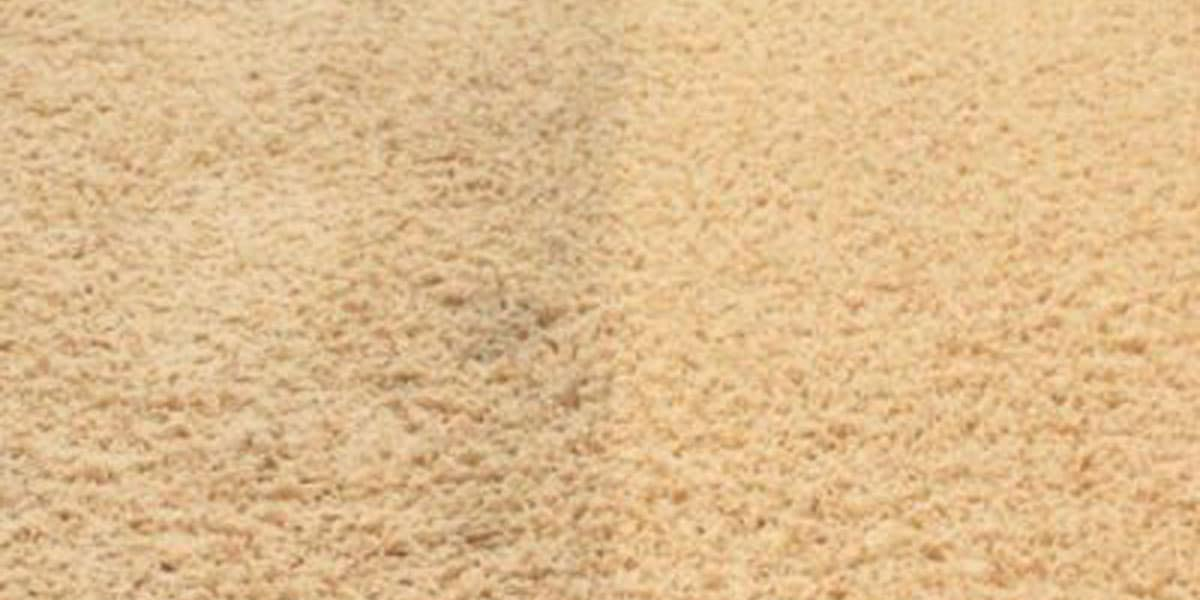 carpet img 02